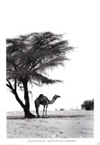 Camel and Tree, Desert of Mauritania Poster af Alexis De Vilar
