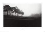 Fog Tree Study III Posters van Jamie Cook