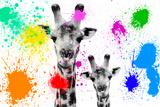 Safari Colors Pop Collection - Giraffes Portrait Lámina giclée por Philippe Hugonnard