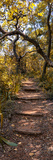 Awesome South Africa Collection Panoramic - African Forest Fall Colors II Fotografisk tryk af Philippe Hugonnard