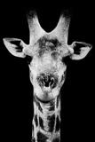 Safari Profile Collection - Portrait of Giraffe Black Edition V Fotografisk tryk af Philippe Hugonnard