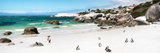 Awesome South Africa Collection Panoramic - Penguins at Boulders Beach II Fotografie-Druck von Philippe Hugonnard
