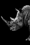 Safari Profile Collection - Rhino Black Edition IV Photographic Print by Philippe Hugonnard