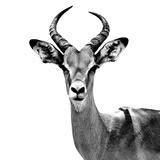 Safari Profile Collection - Antelope White Edition V Lámina fotográfica por Philippe Hugonnard