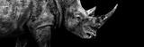 Safari Profile Collection - Rhino Black Edition III Photographic Print by Philippe Hugonnard