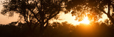 Awesome South Africa Collection Panoramic - African Sunrise Trees Fotografisk tryk af Philippe Hugonnard