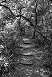 Awesome South Africa Collection B&W - African Forest Fotografisk tryk af Philippe Hugonnard