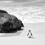 Awesome South Africa Collection Square - Penguin Alone on the Beach B&W Fotografisk tryk af Philippe Hugonnard