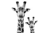 Safari Profile Collection - Portrait of Giraffe and Baby White Edition VI Fotografisk tryk af Philippe Hugonnard