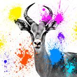Safari Colors Pop Collection - Antelope Reedbuck III Giclée-tryk af Philippe Hugonnard