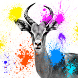 Safari Colors Pop Collection - Antelope Reedbuck III Giclee Print by Philippe Hugonnard