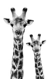 Safari Profile Collection - Portrait of Giraffe and Baby White Edition IV Fotografisk tryk af Philippe Hugonnard