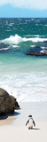 Awesome South Africa Collection Panoramic - Penguins on the Beach V Fotografie-Druck von Philippe Hugonnard