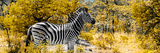 Awesome South Africa Collection Panoramic - Zebra Profile with Yellow Savanna Lámina fotográfica por Philippe Hugonnard