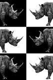 Safari Profile Collection - Rhinos Lámina fotográfica por Philippe Hugonnard