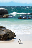 Awesome South Africa Collection - Penguin at Boulders Beach Lámina fotográfica por Philippe Hugonnard