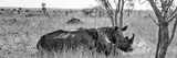 Awesome South Africa Collection Panoramic - Two White Rhinos I Fotografisk tryk af Philippe Hugonnard