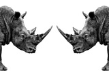 Safari Profile Collection - Rhinos Face to Face White Edition Fotografisk tryk af Philippe Hugonnard
