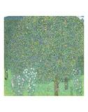 Rosebushes under the Trees, ca. 1905 Posters par Gustav Klimt