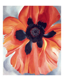 Red Poppy, No. VI, 1928 ポスター : ジョージア・オキーフ