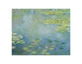 Waterlilies, ca. 1906 Plakater af Claude Monet