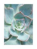 Teal Succulent Vertical Art par Susan Bryant