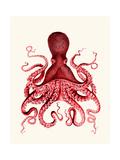 Red Octopus 3 Kunst von Fab Funky