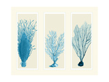 Blue Corals on 3 Panels Art by Fab Funky