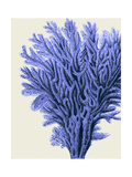 Blue Corals 2 a Premium Giclee Print by Fab Funky