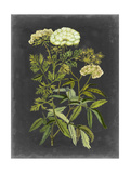Bookplate Floral I Reproduction giclée Premium par Naomi McCavitt
