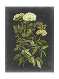 Bookplate Floral I Print by Naomi McCavitt