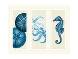 Three Panel Print Sea Urchin Starfish and Seahorse in Blue Kunstdruck von Fab Funky