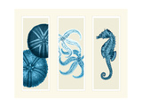 Three Panel Print Sea Urchin Starfish and Seahorse in Blue Lámina por Fab Funky
