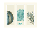 Blue Corals and Sea Urchins in 3 Panels Premium Giclee Print by Fab Funky