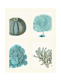Blue Corals and Sea Urchins in 4 Panels Premium Giclee Print by Fab Funky