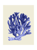 Blue Corals a Premium Giclee Print by Fab Funky