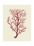 Corals Coral On Cream b Premium Giclee Print by Fab Funky