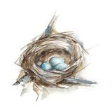 Bird Nest Study II Poster von Ethan Harper