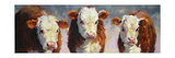 Winter Calves Art by Carolyne Hawley