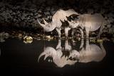 Black Rhinoceros (Diceros Bicornis) Mother and Calf Having a Drink Fotografisk tryk af Wim van den Heever