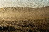 Locust Plague (Locusta Migratoria Capito) Threatens Crops in South Madagascar, June 2010 Photographic Print by Inaki Relanzon