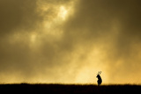 Red Deer Stag (Cervus Elaphus) Silhouetted Against Sky at Dusk, Cheshire, October 2014 Photographic Print by Ben Hall