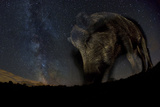 Wild Boar (Sus Scrofa) at Night with the Milky Way in the Background, Gyulaj, Tolna, Hungary Photographic Print by Bence Mate