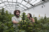 Man and Woman with Cannabis Plant in Organic Marijuana Farm, Pueblo, Colorado, USA, June 2015 Photographic Print by Jeff Rotman