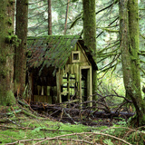 Rotting Wooden Shed Covered in Moss, Washington State, Usa Fotografisk tryk af Mark Taylor