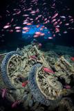Soldierfish Swimming Above British Motorbikes (Norton 16H) in Hms Thistlegorm Wreckage, Red Sea Fotografie-Druck von Alex Mustard