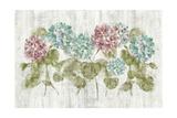 Vibrant Row of Hydrangea on Wood Impressão giclée premium por Cheri Blum