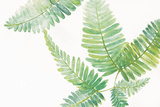 Ferns I Square Prints by Chris Paschke