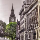London Tree Impressão giclée por Assaf Frank