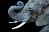 A Female African Bush Elephant, Loxodonta Africana. Fotografisk tryk af Joel Sartore